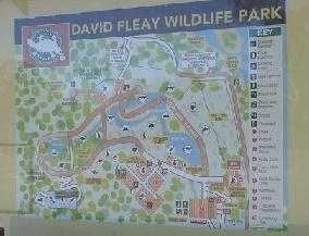 DAVID FLEAY WILD LIFE PARK コアラと一緒にお写真とれます。ドリームワールドのように並びませんし、時間もゆっくりでよく観察できます。