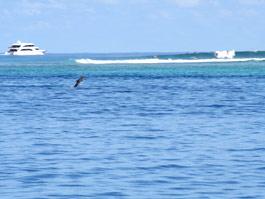 ボートから写真を撮っていたら偶然、イルカがジャンプ。