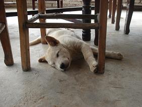 レストランで僕らより食べてた犬