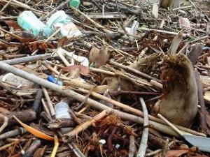 20110619浜のゴミ