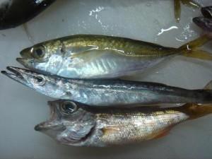 魚釣り2011